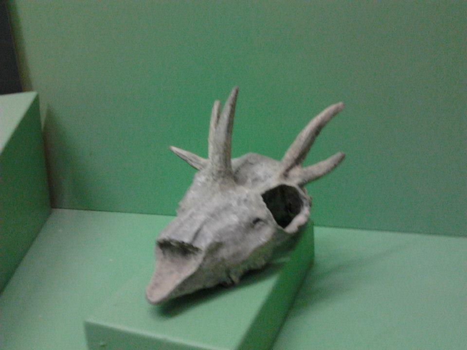 Il Cervo Pentacornuto
