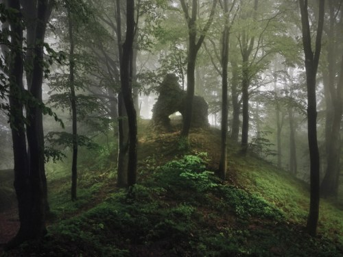 09-rudere-nel-bosco